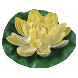 Lilia wodna śr 19 cm żółta