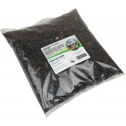 Słonecznik czarny dla ptaków 1kg