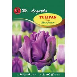 Tulipan Blue Parrot, papuzi - 30szt.