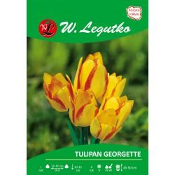 Tulipan Georgette, wielokwiatowy - 30szt.