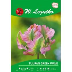 Tulipan Green Wave, papuzi - 30szt.