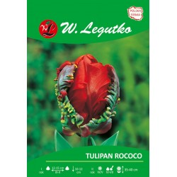 Tulipan Rococo papuzie (op.30 szt.)