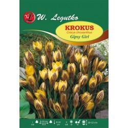 Krokus Gipsy Girl , Chrysanthus - 80szt.