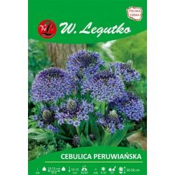 Cebulica peruwiańska, niebieska - 1szt.