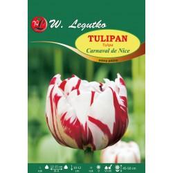 Tulipan Carnaval de Nice, pełny późny - 30szt.