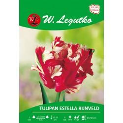 Tulipan Estella Rijnveld, papuzi - 30szt.