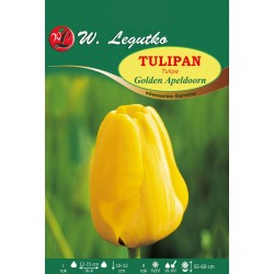 Tulipan Golden Apeldoorn mieszaniec Darwina - 30szt.