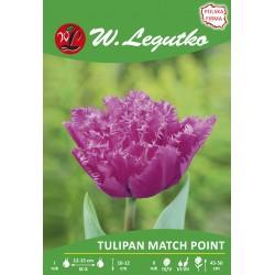 Tulipan Match Point, strzępiasty pełny - 30szt.