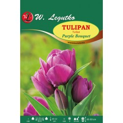 Tulipan Purple Bouquet, wielokwiatowy - 30szt.