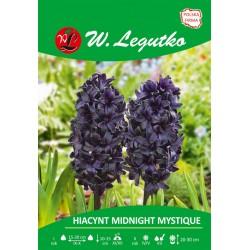 Hiacynt Midnight Mystique - 1szt.