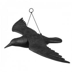 Kruk w locie - odstraszacz ptaków
